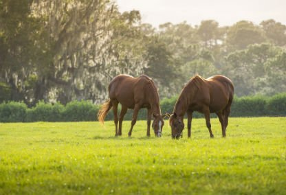 Jupiter Farms horses