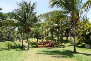 Palm Garden in Palm Beach Gardens