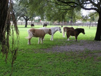 Ranch Colony horse farms for sale